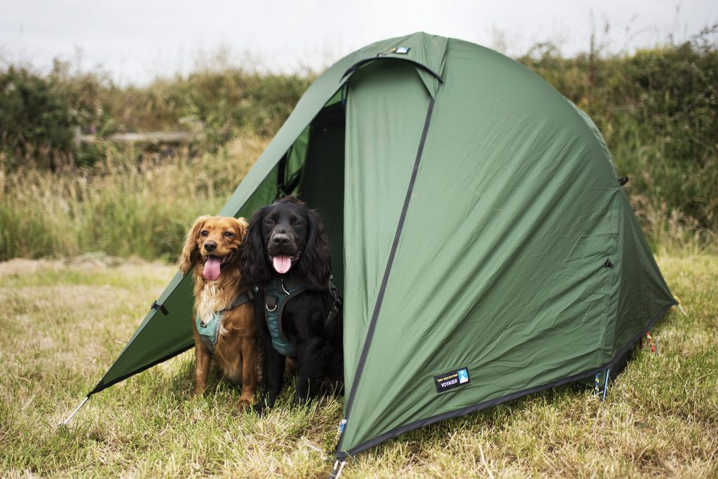 Wild Camping with Dogs