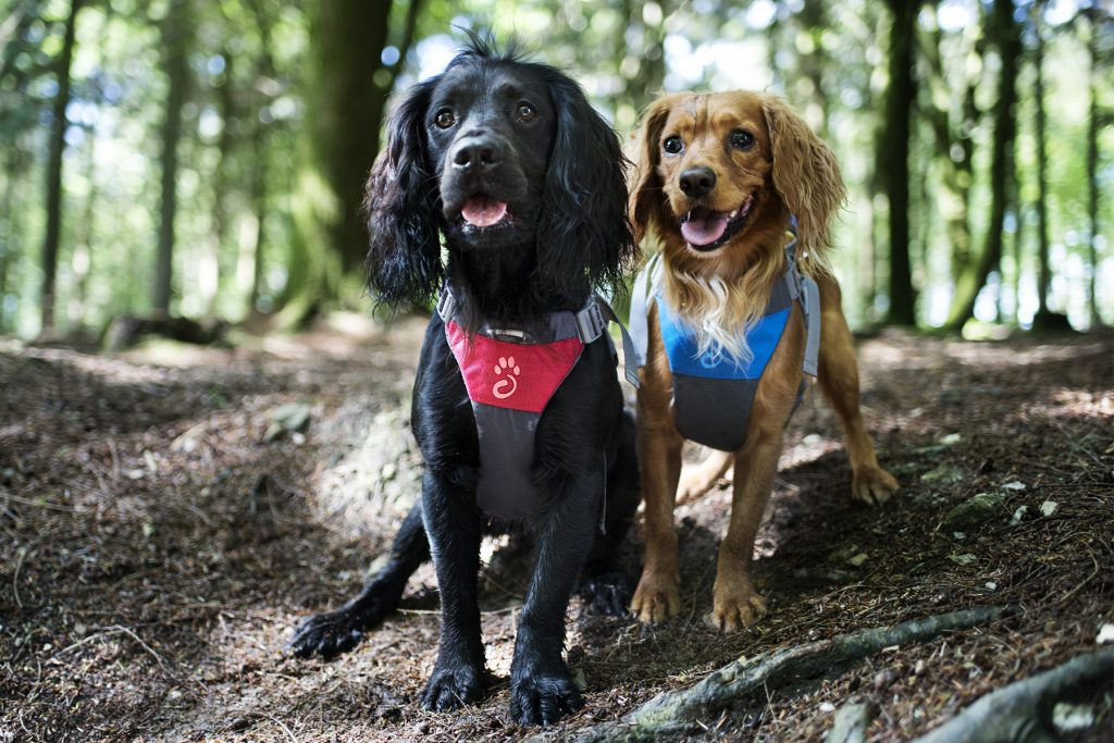 Choosing a Harness for Your Dog