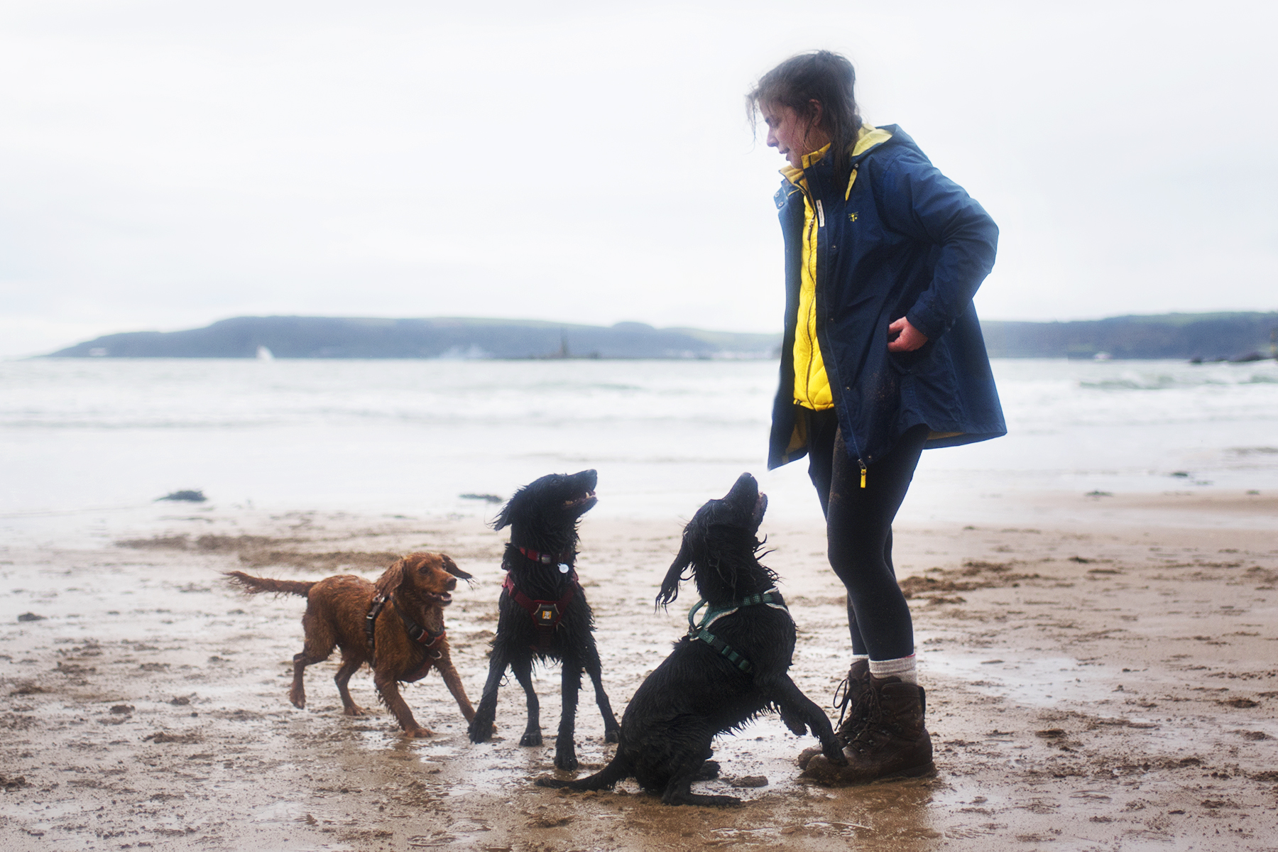 The Pressure To Be a Perfect Dog Owner | Paws and Tors