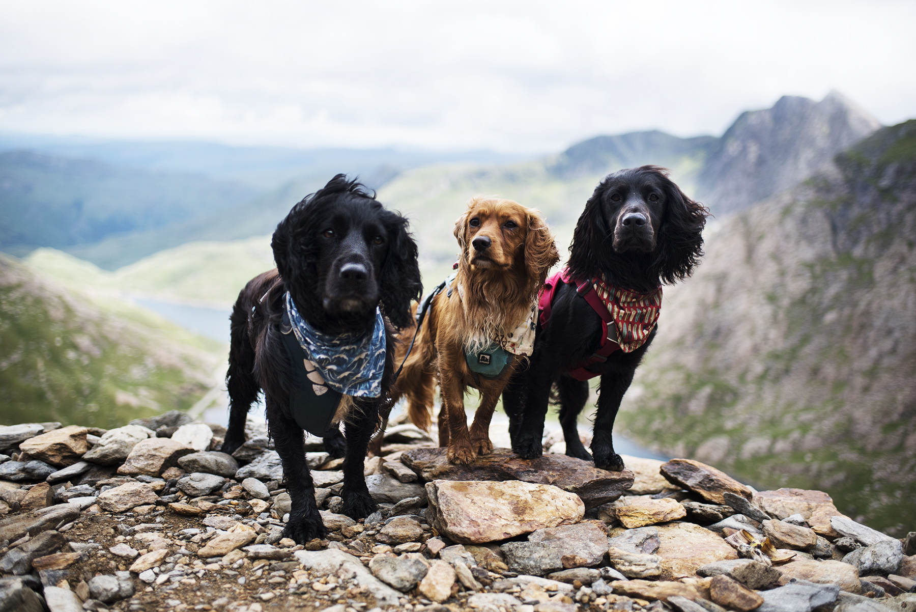 Our Foster Dog Adventure List | Paws and Tors